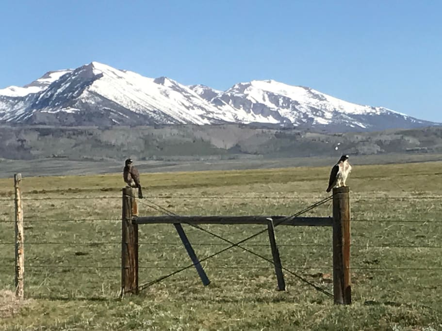 Beautiful picture from Ben and Amber of hawks enjoying the view of Mount Zirkel