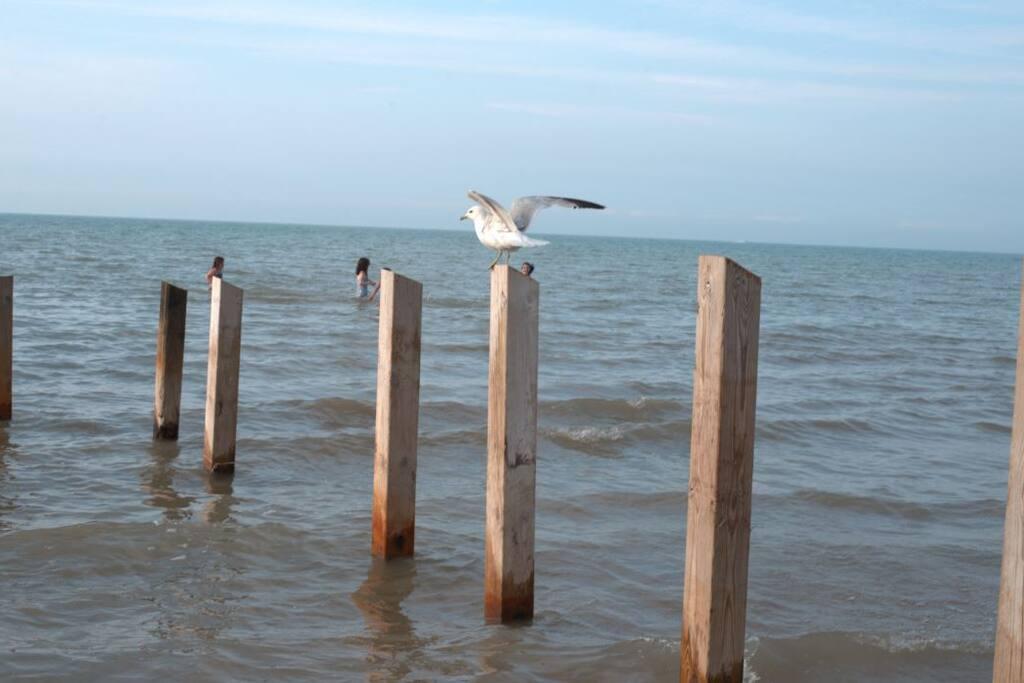 Ipperwash Beach