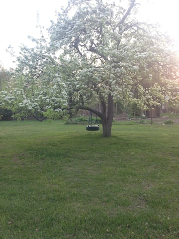 Pear blossom cabin