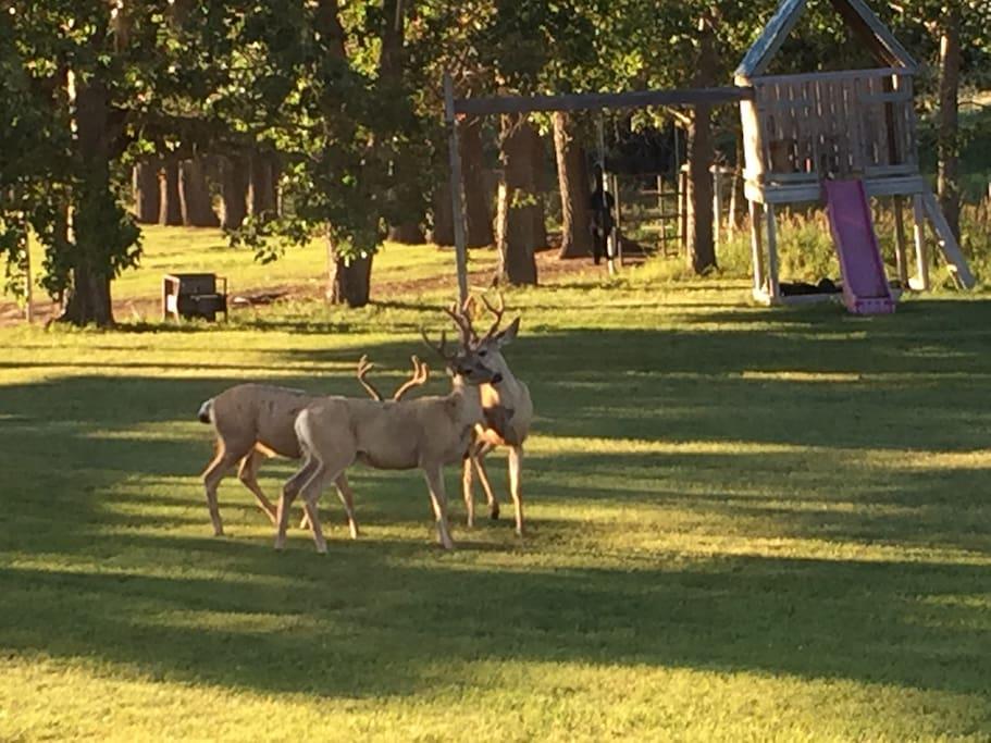 Sometimes we have visitors