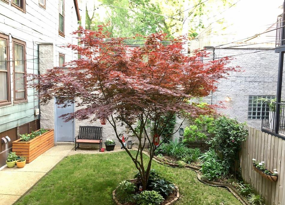 Backyard / Garden