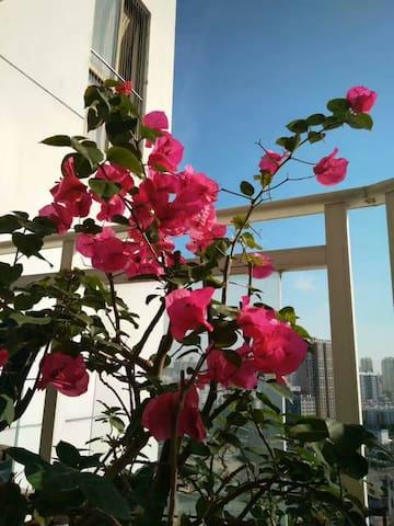 七月的三角梅,花儿开的好美。