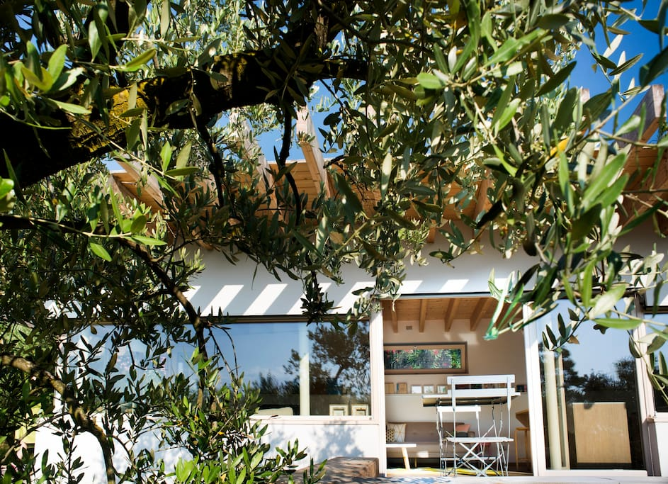 It is surrounded by Olive Trees.