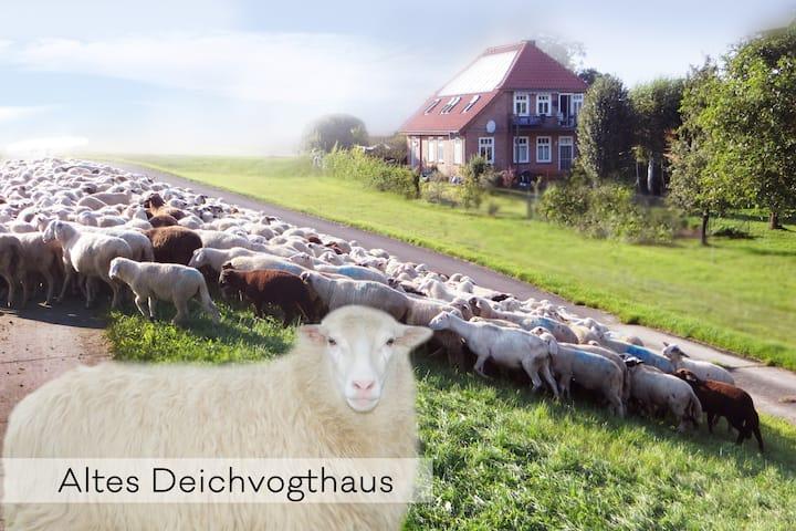 Auszeit am Elbufer, Garten + Schafe