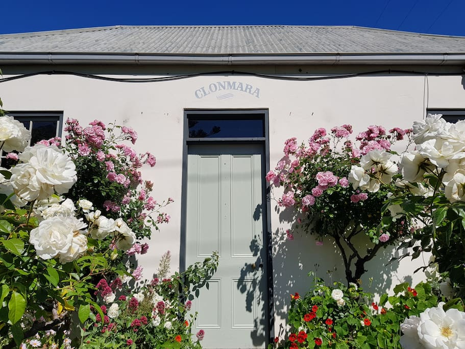 Clonmara in full bloom.  Prettiest house on the block!
