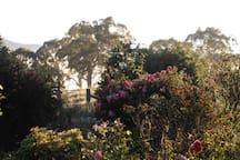 Part of the garden in the morning light