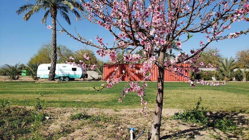 Pinnacle Farms RV Camp site