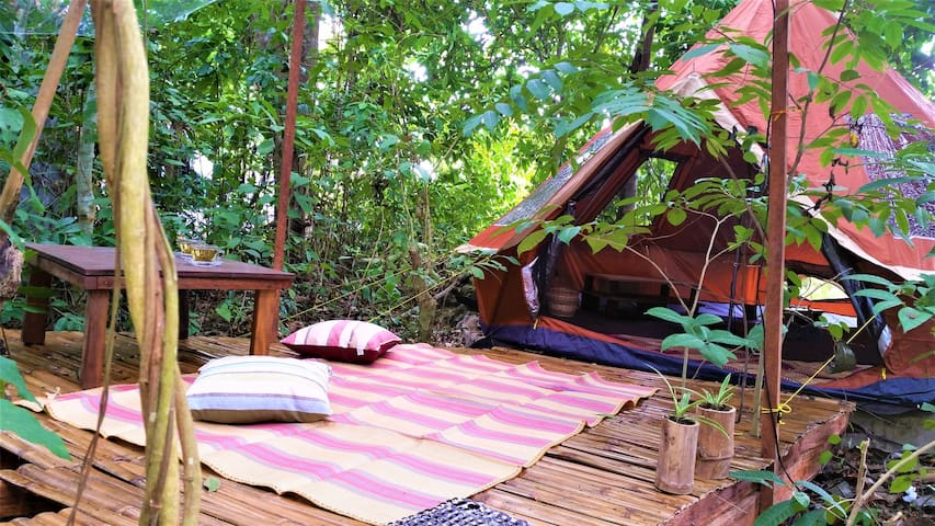 Eco-friendly Glamping in Mini-Forest