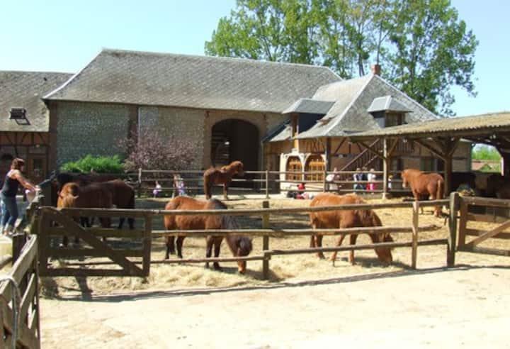 Gîte de groupe au milieu des poneys
