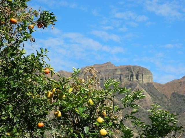 Inca Cara Lodge & Camping - Vilcabamba - Srub