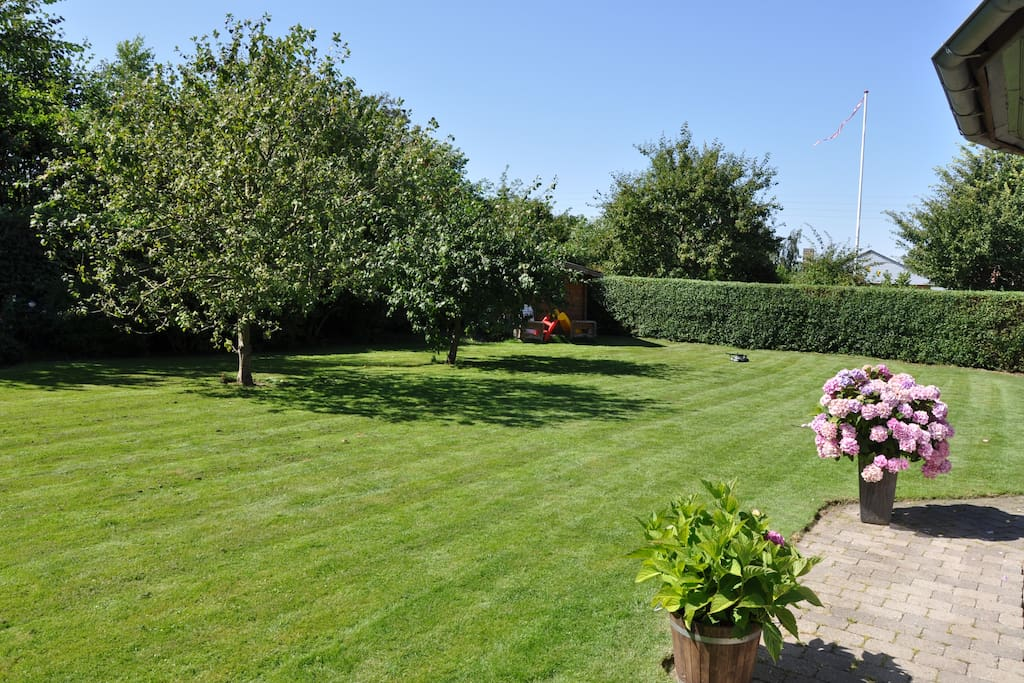 Garden with fruit treas and lots of flowers