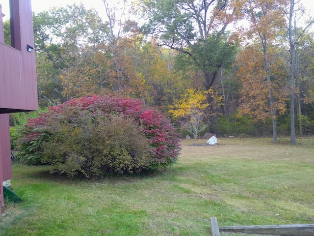 Beautiful peaceful home nestled on 29 wooded acres