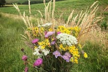 Wild flowers foraged on South Downs walk