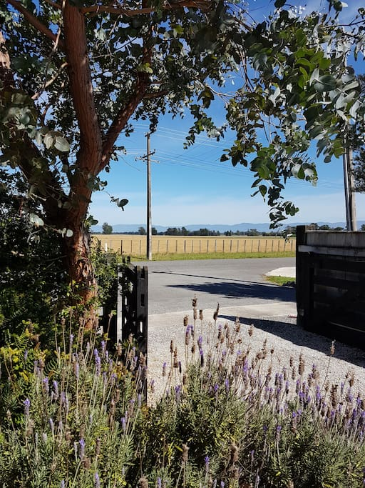View through the front gate at Lavender53