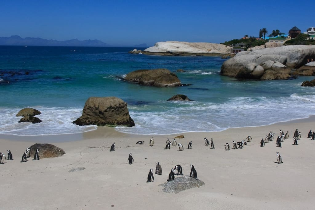 Boulders Beach, with its famous penguin colony, is a short drive from the house.