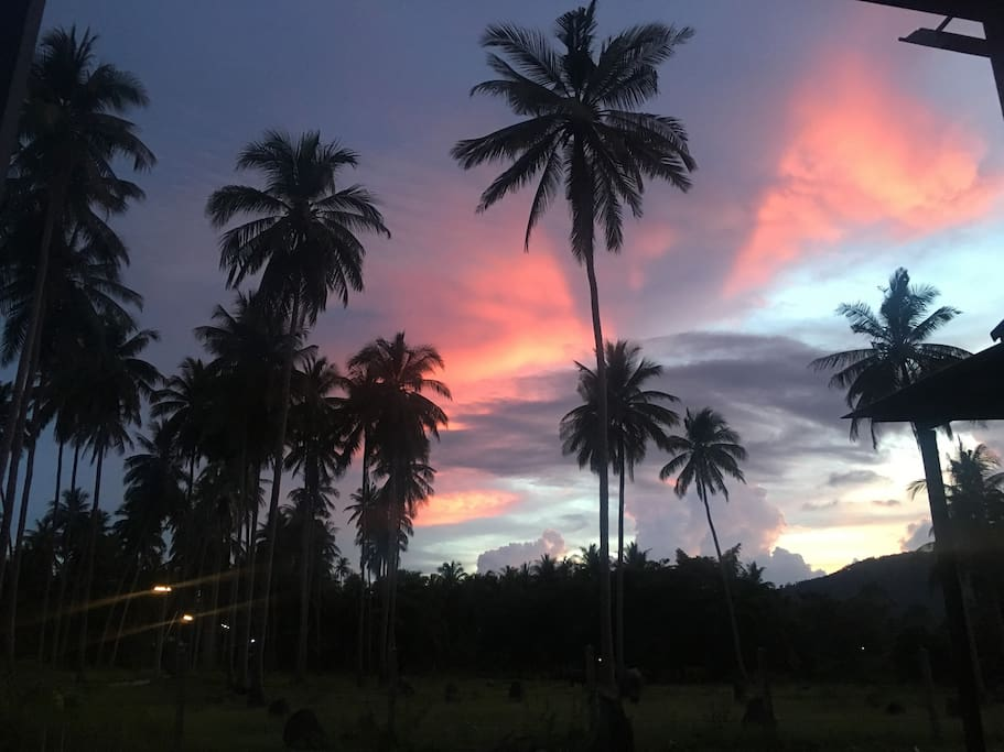 Coconut trees to the right