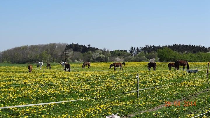 Værelse på hest/dyrfarm