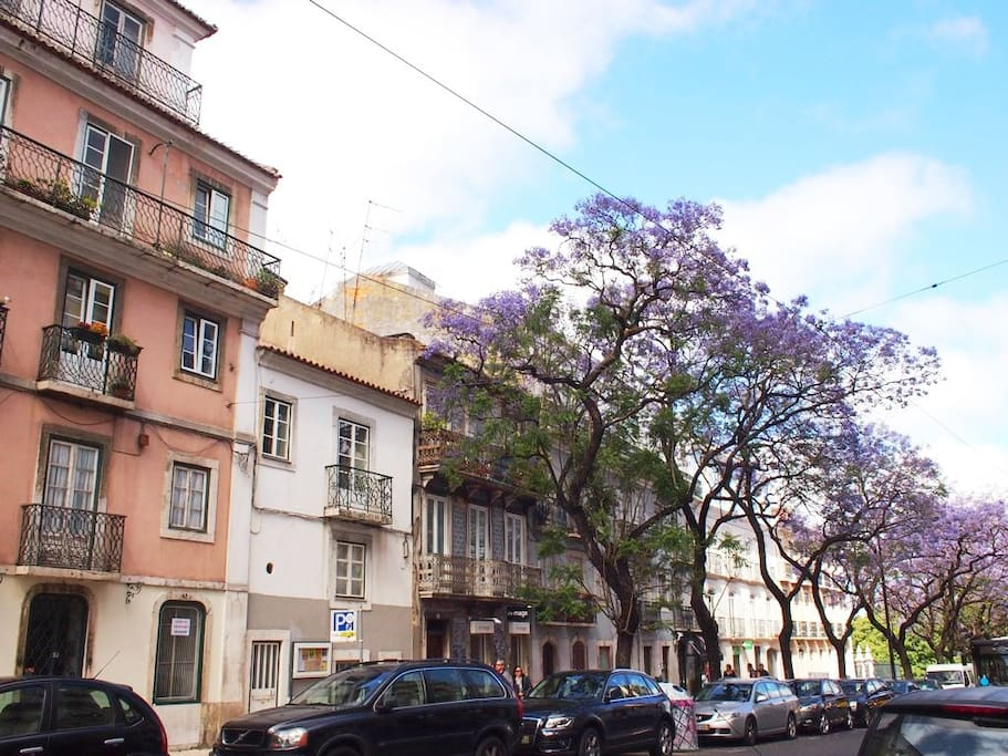 The apartment is at beautiful Rua Dom Pedro V, in an area with wide white stone sidewalks