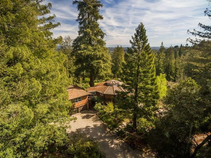 Juju Paradise: Santa Cruz Redwoods Retreat