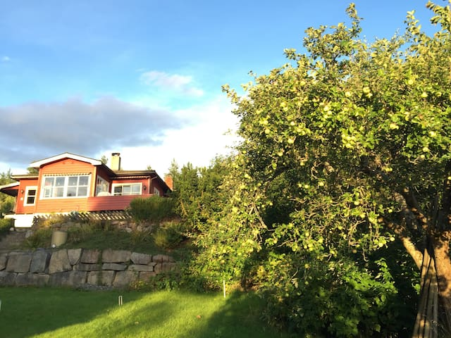 Timbermans Pink Double - forrest, fjord and sunset - Nesodden - Huis
