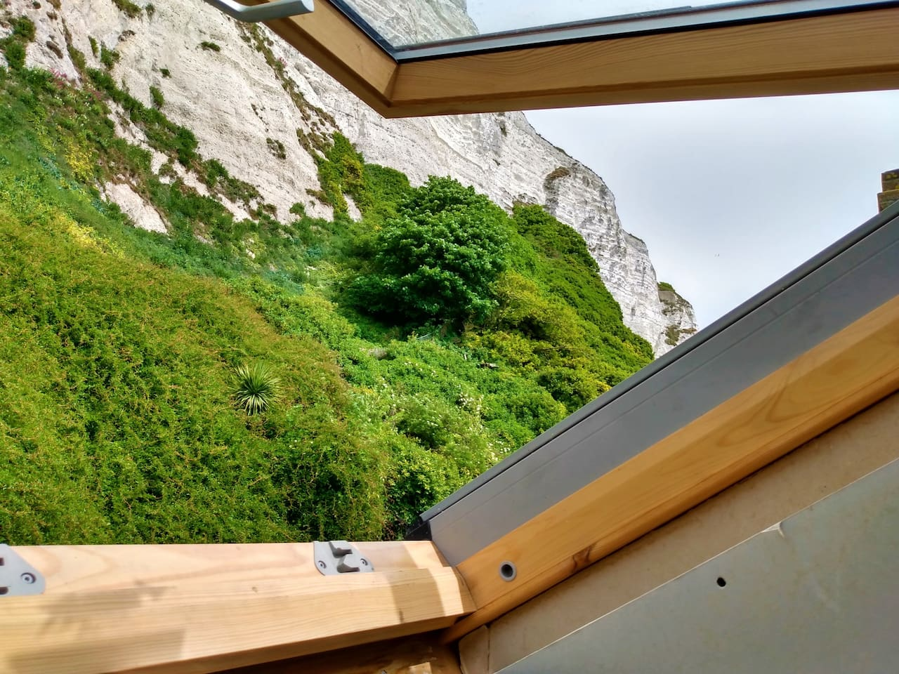 Watch the falcons circle the White Cliffs of Dover