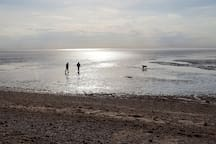 Evening dog walkers on the flats