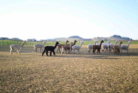 Grazing Hills Alpaca Ranch