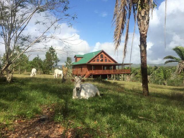 Heaven Valley Grand Chalet: 90 Acres near Tourism