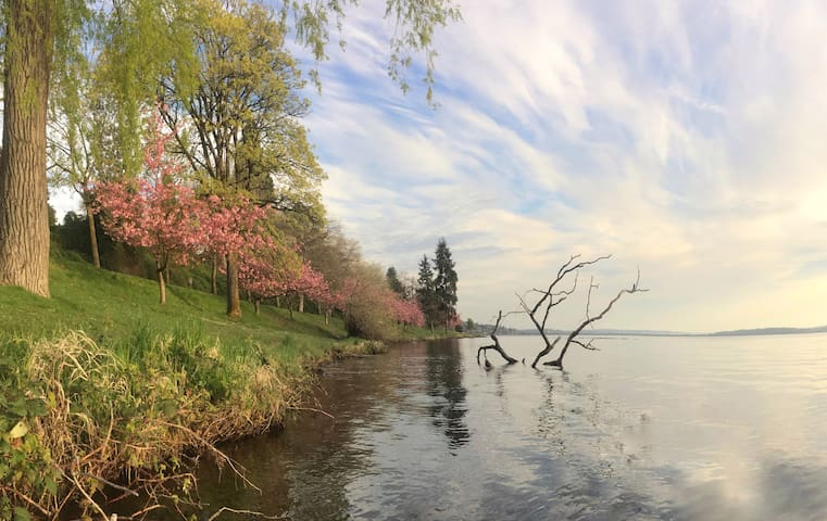 We're a 15 minute walk from Lake Washington. A beautiful trail goes along the water to historic Seward Park.