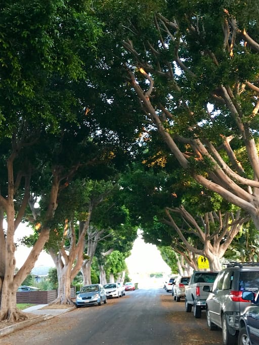Our beautiful, tree lined street. An oasis in urban LA!