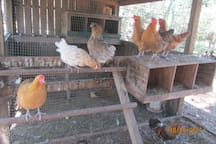 ...and fresh eggs from our free-range girls are available in season.