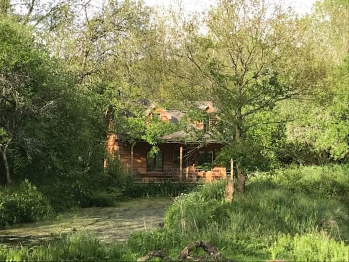 Magical Pond House