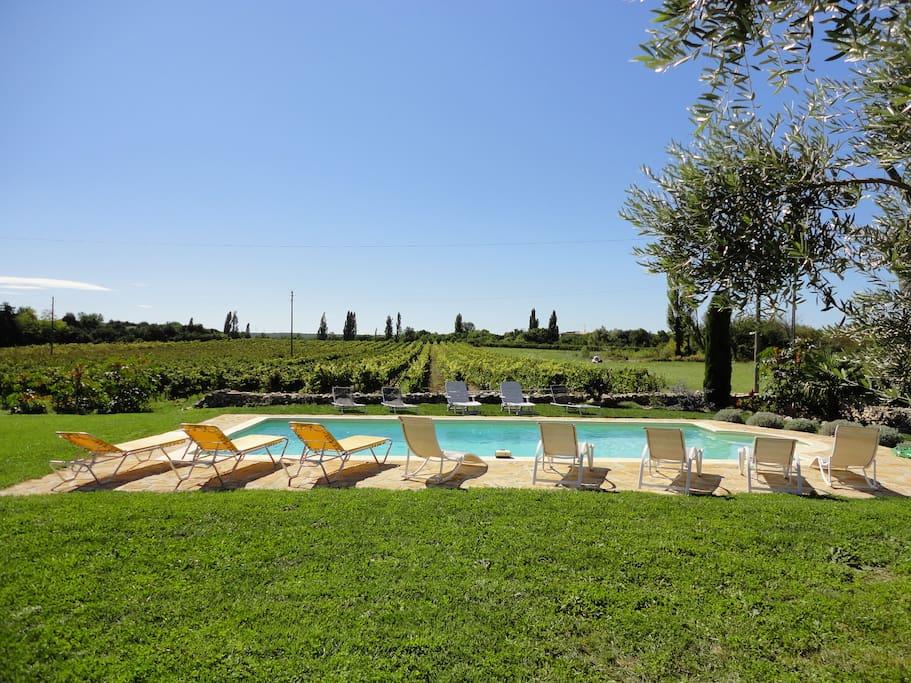 La piscine face aux vignes, plein sud