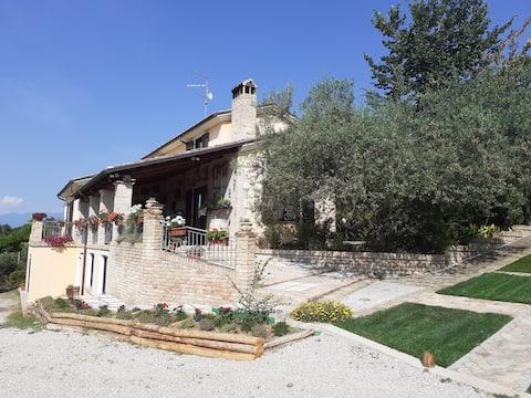 Villa amid olive trees.