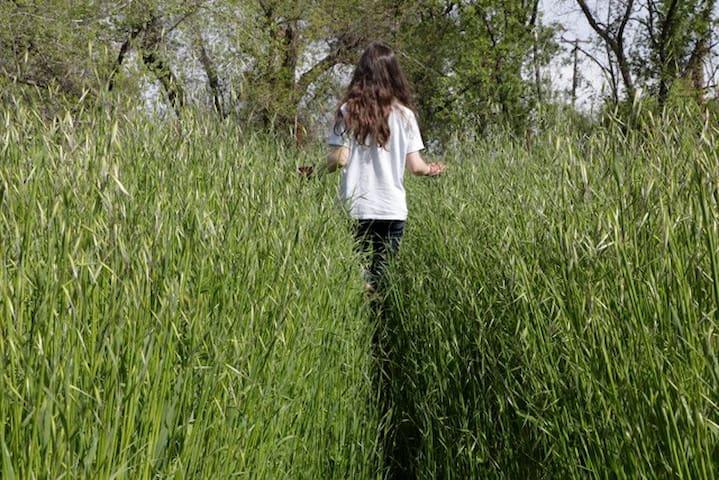 Walk thru our meadows