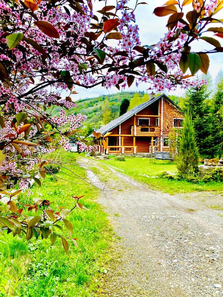MySynevyr - будинок у серці Карпат