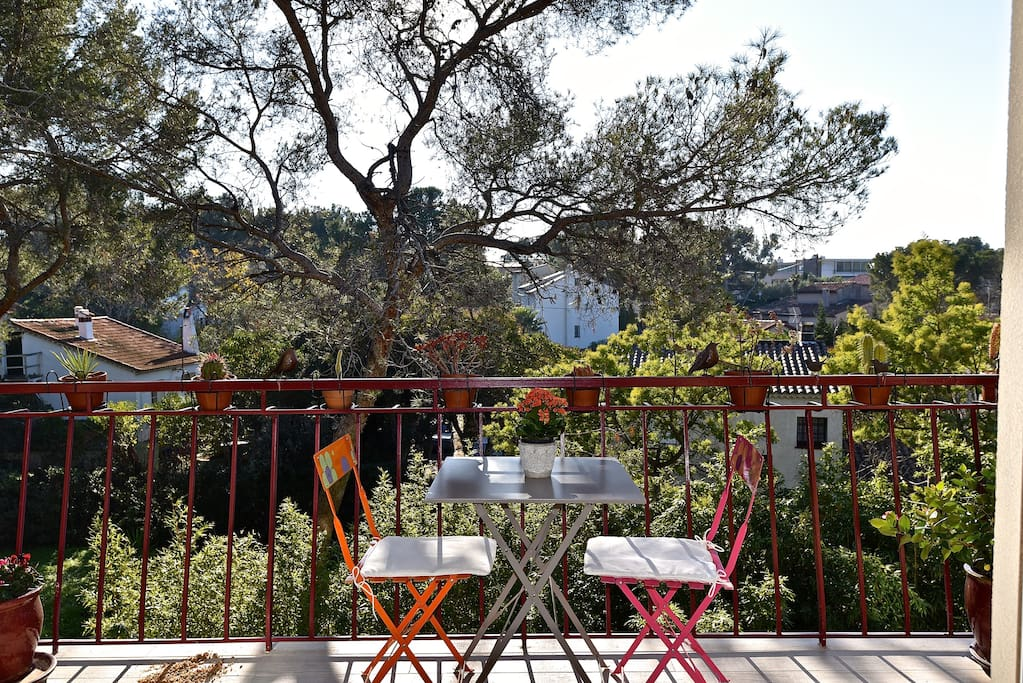 Balcon au milieu des pins et mimosas.  Pine trees and mimosas, playground of the squirrels
