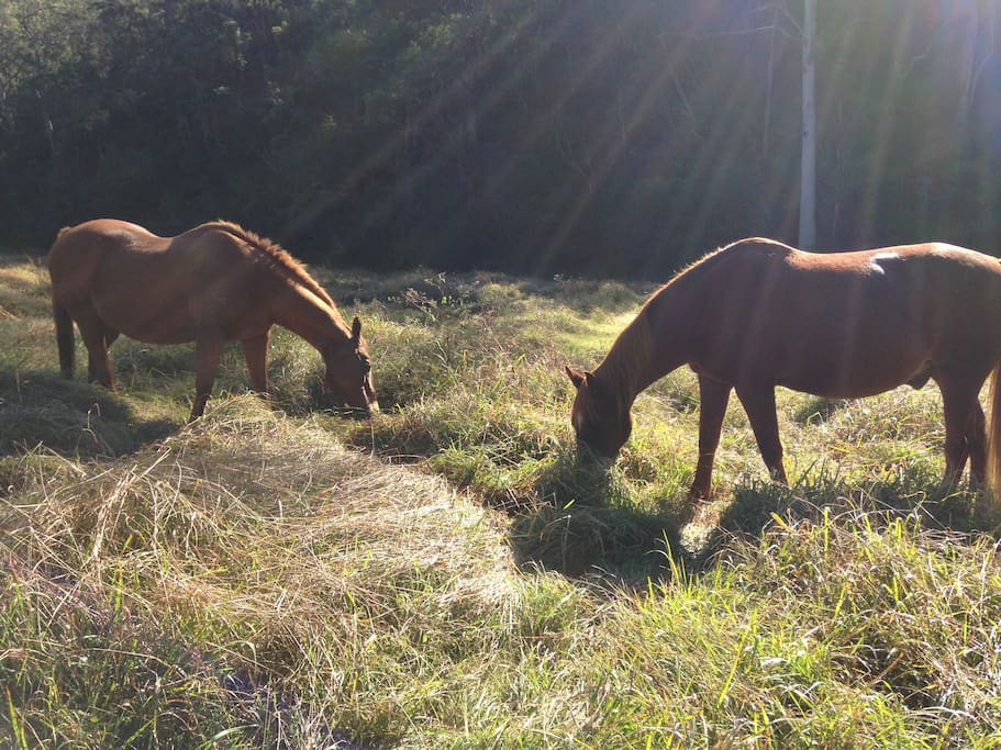 Our horses grazing in the valley