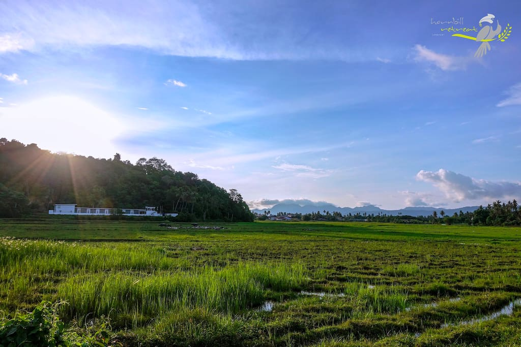 Scenery paddy view (photo taken on April)