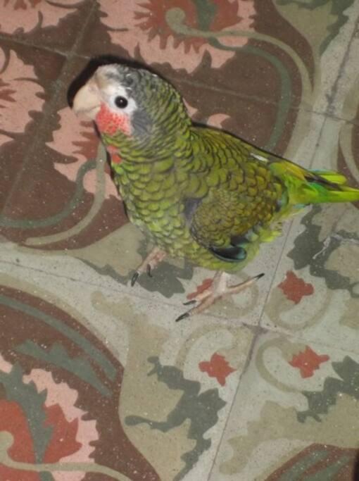 Lola, nuestra mascota / Lola, our pet