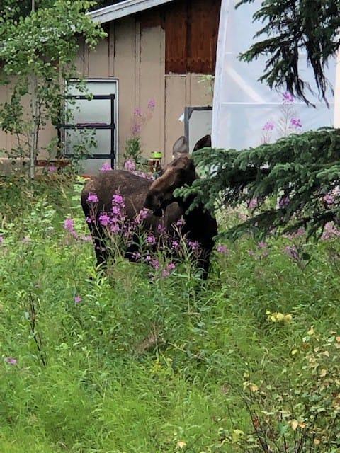 Cabina de madera de Alaska situada en 3 acres.