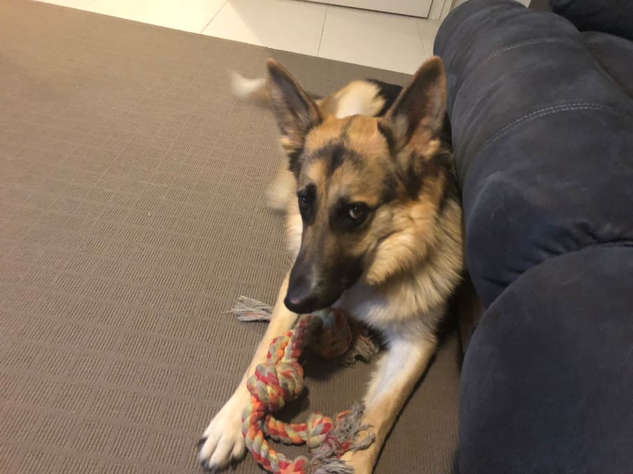 I have an 18 month old German shepherd called Axel. He is a very friendly house trained dog