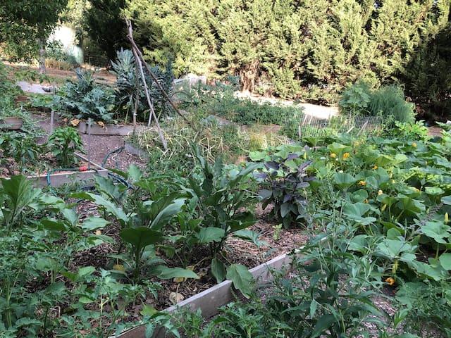 Summer Vegie Gardens