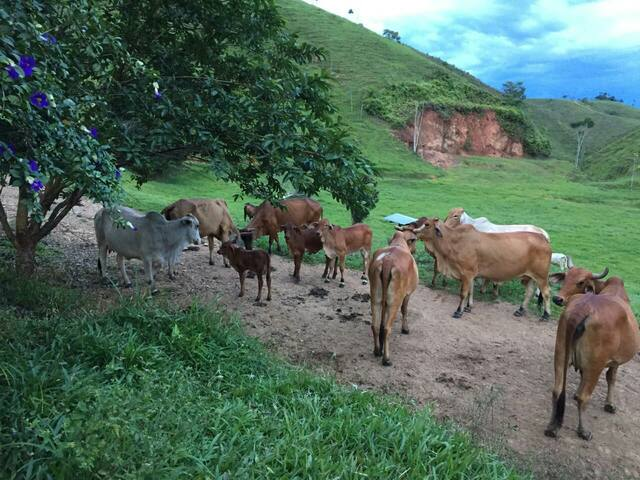 Finca ecoturiatica, Las Antigua pavas