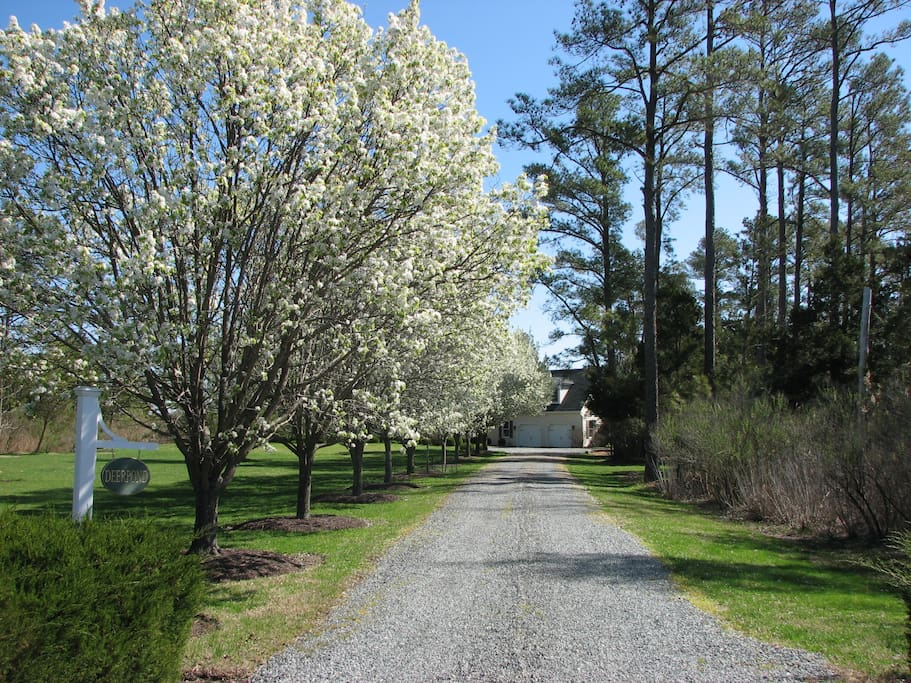 Spring - Carriage House is 300 ft. off the road set in tall pines for privacy.