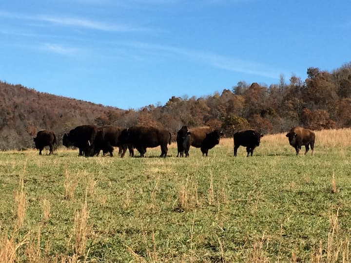 Ozark Valley Bison Farm, LLC