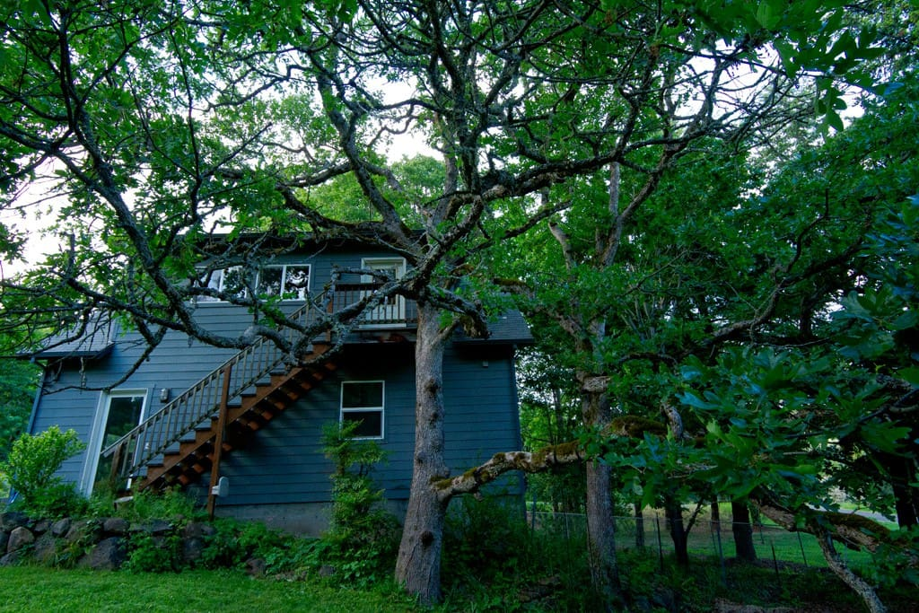 Treetop Loft perched above the garage among oaks