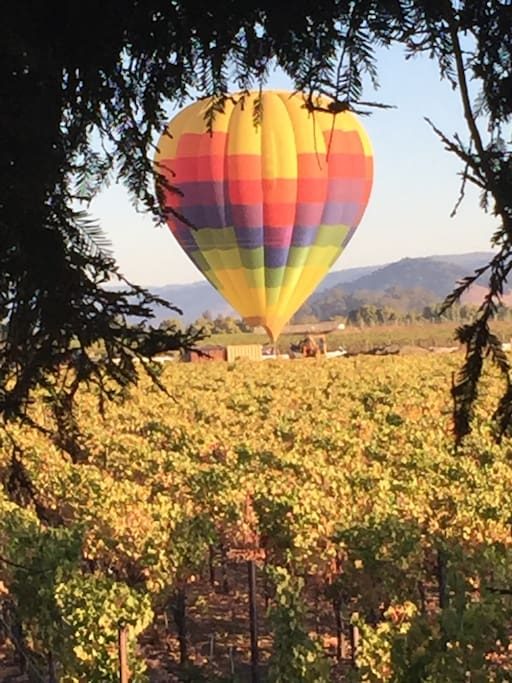 Hot air balloons land at Ashes & Diamond winery.