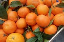 I mandarini dell'azienda agricola di famiglia.
