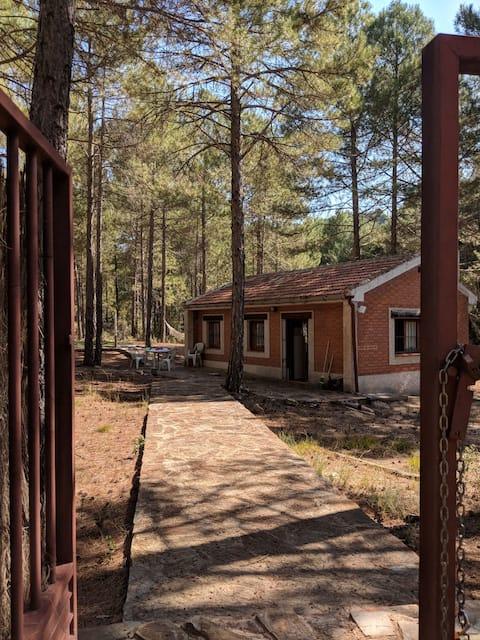 Preciosa casita rodeada de pinos en Trillo